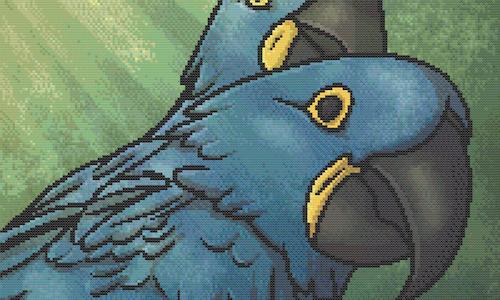 Buy-a-WIP | Hyacinth Macaws